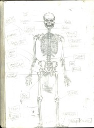(Sketchbook 2005-7) - Muscles - Skeleton Study - Graphite